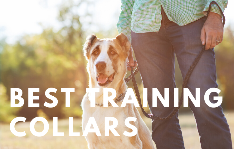 Best-dog-Training-Collars