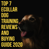 9 Best E Collar For Dog Under $100 Reviews – Updated 2020