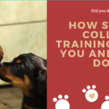 How Shock Collar Training Helps You And Your Dog
