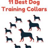 11 Best Dog Training Collars  – Reviews and Buyer's Guide