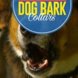7 Best Dog Bark Collars Hot In The Market